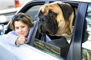17031286470592022 Heat Stroke   Dont Leave your Dog in your Car!