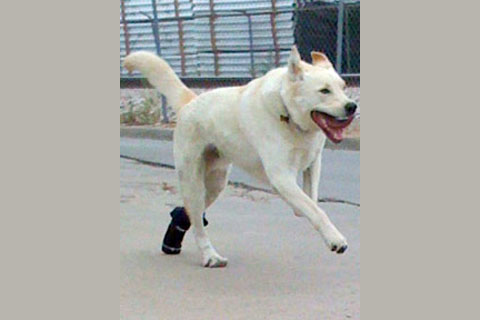 26526801846921444 Orthotics Give Pets a Step Up to Normal Lives!