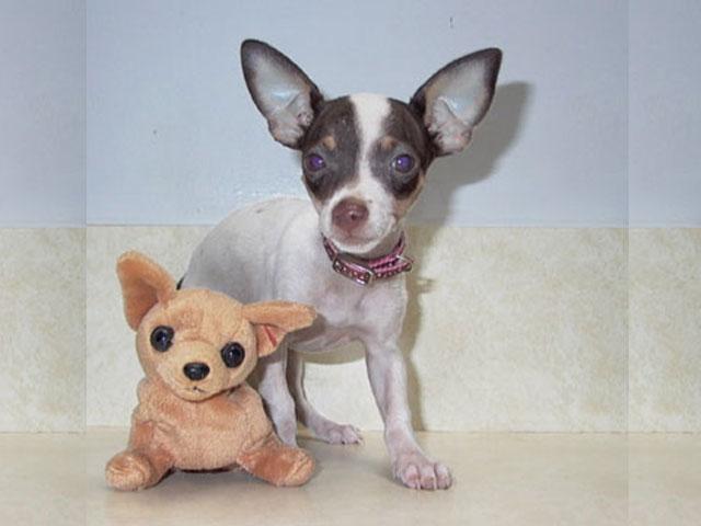 5667286482639611 Puppy Health