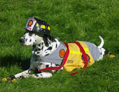 9863060326315463 Did you know that your dog can start a House Fire?